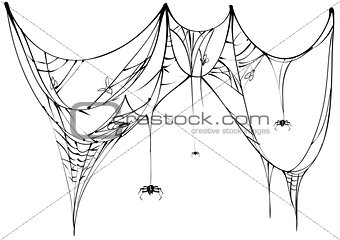 Black spider and torn web on white background