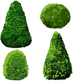 Collection of Bushes and Cypress