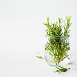 Fresh italian herbs in water
