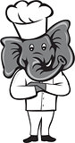 Chef Elephant Arms Crossed Standing Cartoon