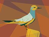 Tern illustration