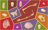 human bones. Skeletal anatomy set