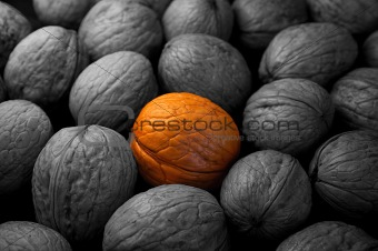 Golden walnut