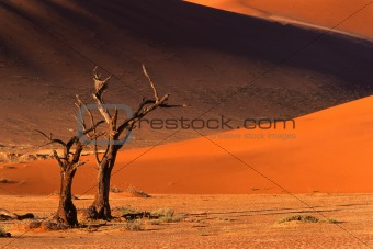 Tree and dune