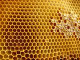 honeycomb shapes