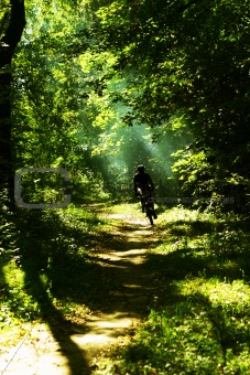 a mountain biker in a forrest