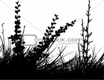 Foliage - vector