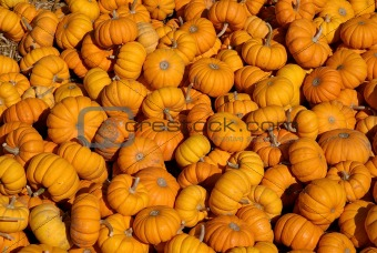 small assorted pumpkins