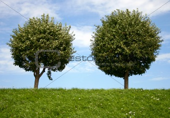Image 78228 Two Round Trees From Crestock Stock Photos