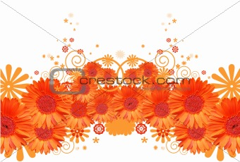 gerber daisy abstract background