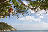 Man in a tree at the beach