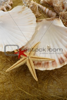 abstract background with various of seashells