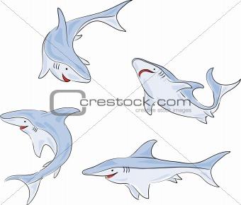 Four shark