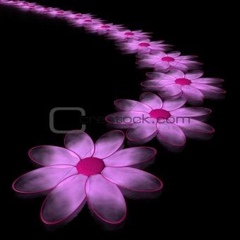 pink chamomiles