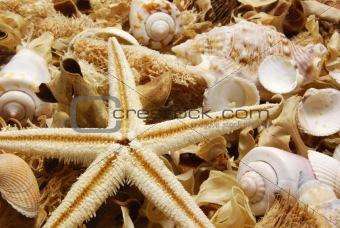 Potpourri with starfish