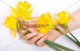 Daffodils and woman hand