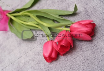 Three red tulips lay on a lilac background