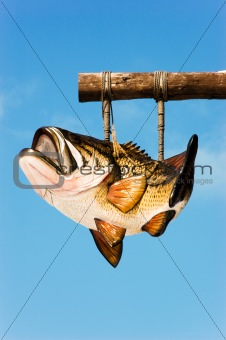 Bass Fish Hanging