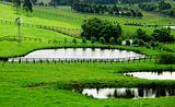 Rural Meadows