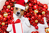 christmas santa claus dog and xmas balls as background
