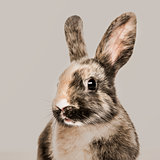 Close-up of a Rabbit against a beige background