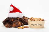 Spaniel Puppy Dog in Christmas Hat by Bowl of Biscuits
