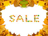 Autumn maple-leafs background with word SALE composed of autumna