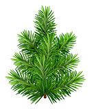 Green young Christmas tree isolated on white background