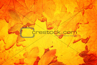 Grunge fall background with old paper texture