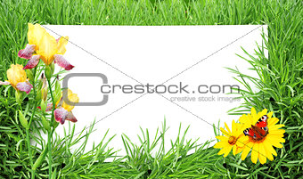 Green grass, flower, butterfly and sheet of white paper