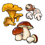 Set of chanterelle, champignon, porcini edible mushrooms