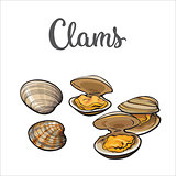 Raw clams isolated on white background