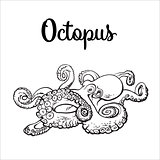 Drawing of octopus isolated on white background