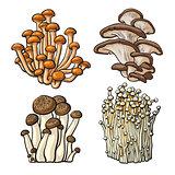 Set of shimeji, oyster, enokitake and king trumpet edible mushrooms