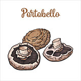 Set of portobello edible mushrooms