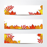 Set of banner templates with maple, oak, rowan fall leaves