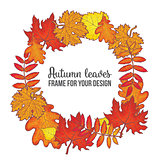 Round frame with fall leaves - maple, oak, rowan, birch