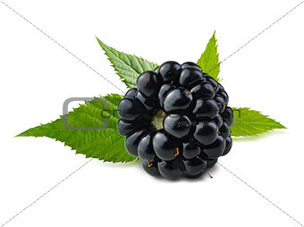 Blackberry with leaves.