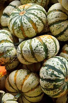 Small pumpkins at Halloween market in USA.