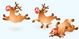 Christmas Reindeer Collection