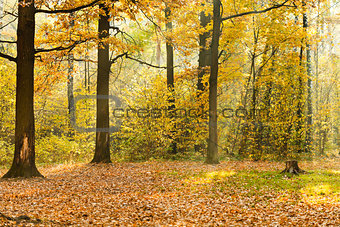forest glade illuminated by sunbeams in