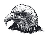 Eagle head. vector illustration