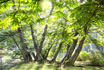 green deciduous trees with the sun casting its warm rays through the foliage