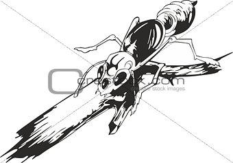 Ant on twig