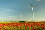 wild poppys field flowers behind wind turbines farm