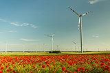 wild poppys field flowers behind wind turbines farm