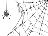 Large black spider and web on white background