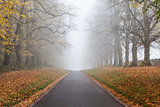 Autumn Fall Tree Lined Road Leading Into Mist or Fog