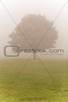 Single Tree in Mist or Fog