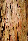 eucalyptus wood bark texture